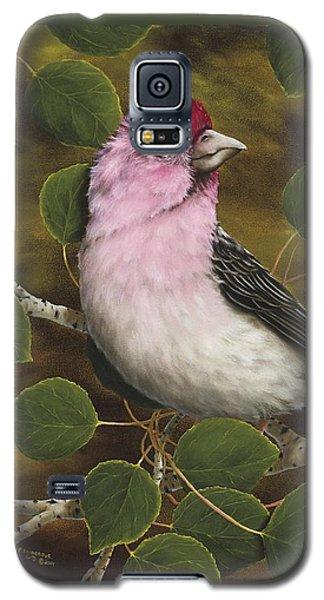 Finch Galaxy S5 Case - Cassins Finch by Rick Bainbridge
