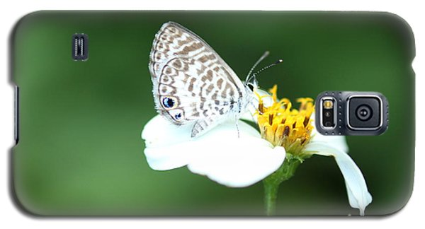 Galaxy S5 Case featuring the photograph Cassius Blue On Wildflower by Greg Allore
