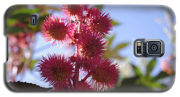 Galaxy S5 Case featuring the photograph Castor Bean by David Rizzo