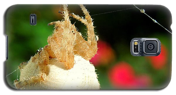 Cat-faced Spider With Pink Galaxy S5 Case by Heidi Manly