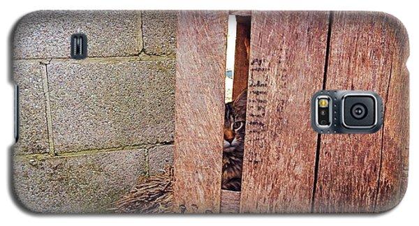 Cat In Hiding Galaxy S5 Case