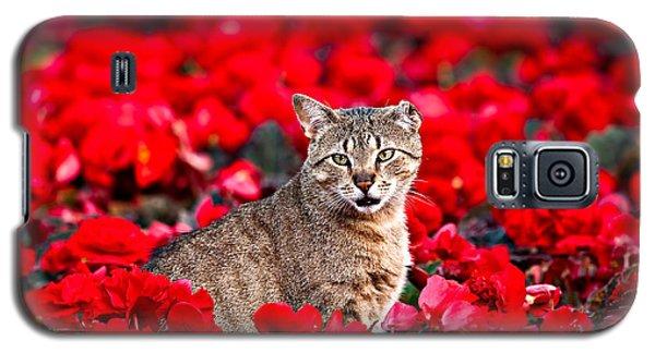 Cat In Red Galaxy S5 Case