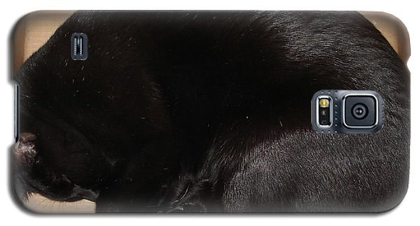 Galaxy S5 Case featuring the photograph Cat In The Box by Kerri Mortenson