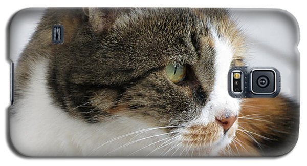 Galaxy S5 Case featuring the photograph Cat by Laurel Powell