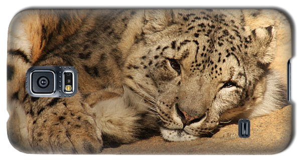 Cat Nap Galaxy S5 Case