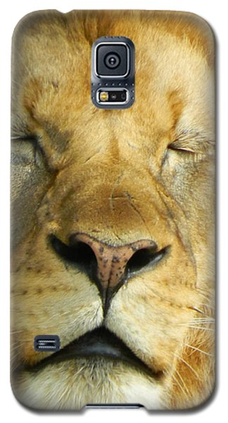 Cat Nap Galaxy S5 Case by Emmy Marie Vickers