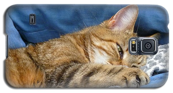 Galaxy S5 Case featuring the photograph Cat Nap by Lingfai Leung