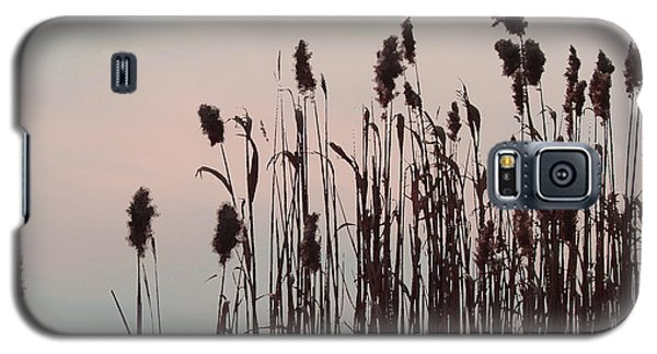 Cat Tails At Sunset Galaxy S5 Case by Margie Avellino
