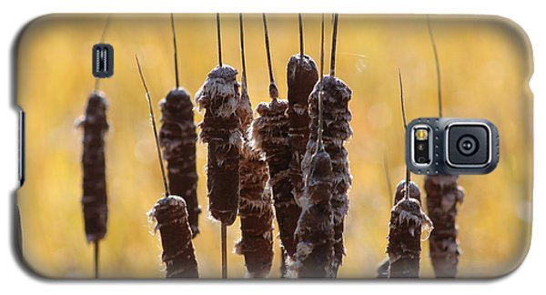 Galaxy S5 Case featuring the photograph Cat Tails In November by Bruce Patrick Smith