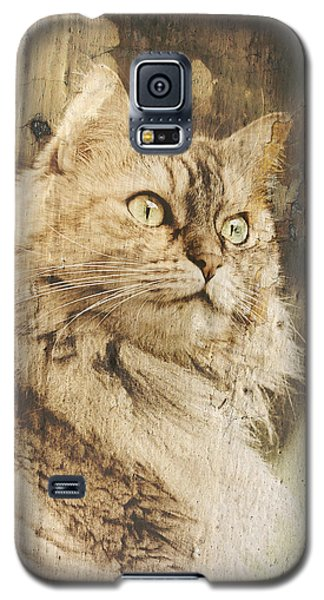 Cat Texture Portrait Galaxy S5 Case