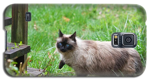 Cat Walking Galaxy S5 Case