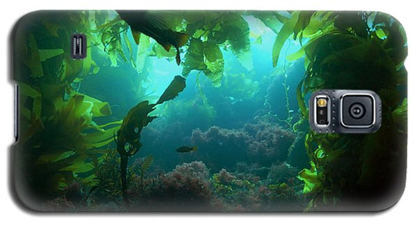 Catalina Kelp Forest Galaxy S5 Case