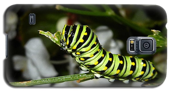 Galaxy S5 Case featuring the photograph Caterpillar Camouflage by Bill Swartwout