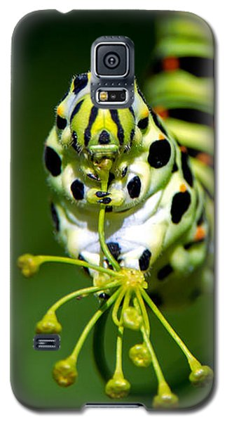 Caterpillar Of The Old World Swallowtail Galaxy S5 Case by Torbjorn Swenelius