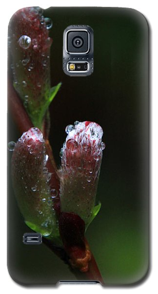 Catkin Raindrops Galaxy S5 Case