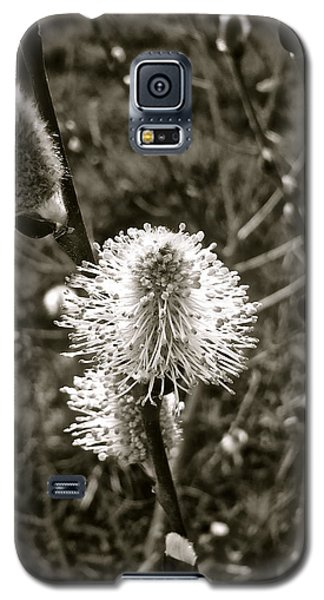 Catkins In Bloom Galaxy S5 Case
