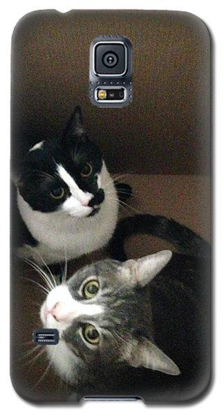 Tabby Cat Kitten Photography Pets  Galaxy S5 Case
