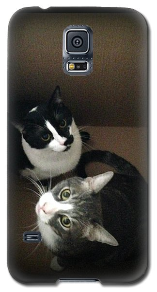 Cats In The Box Galaxy S5 Case