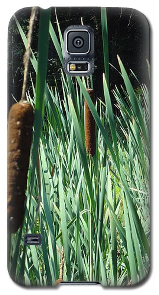 Galaxy S5 Case featuring the photograph Cattails A Plenty by Michael Porchik
