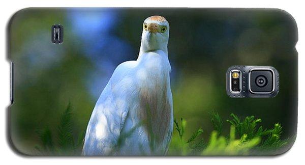 Cattle Egret Eyes Galaxy S5 Case