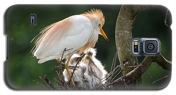 Cattle Egret Tending Her Nest Galaxy S5 Case