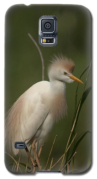 Cattle Egret Galaxy S5 Case