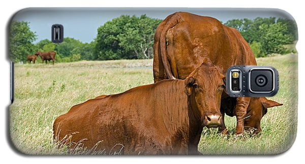 Galaxy S5 Case featuring the photograph Cattle Grazing In Field by Charles Beeler