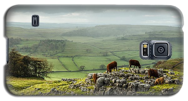 Cattle In The Yorkshire Dales Galaxy S5 Case