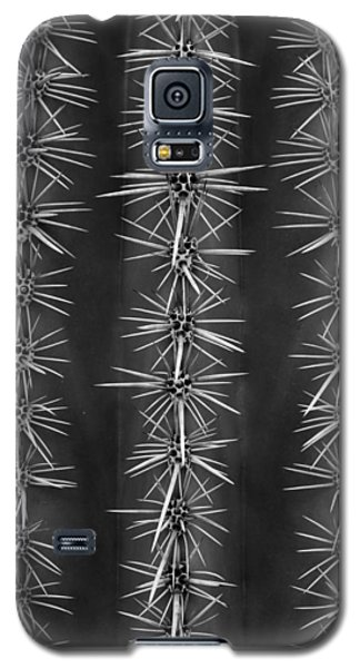 Galaxy S5 Case featuring the photograph Catus Needles by Glenn DiPaola