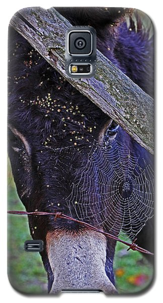 Caught In The Web Galaxy S5 Case