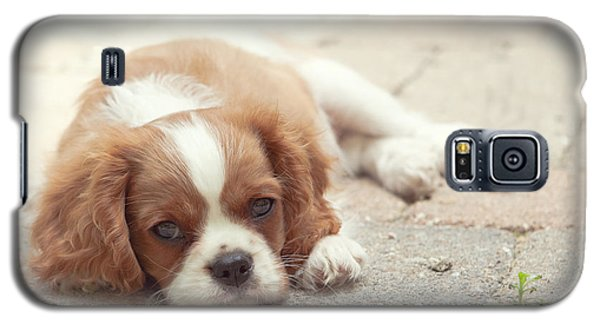 Cavalier Puppy Galaxy S5 Case
