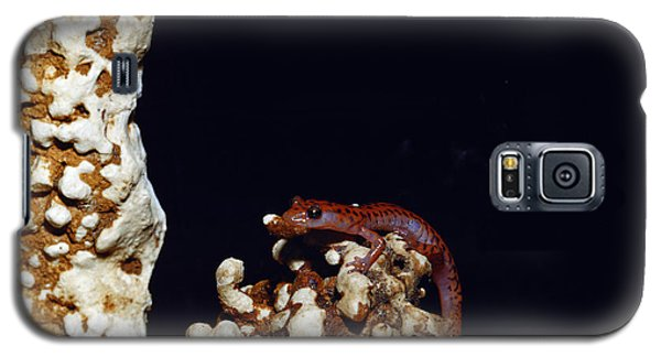 Cave Salamander Galaxy S5 Case by Charles E. Mohr