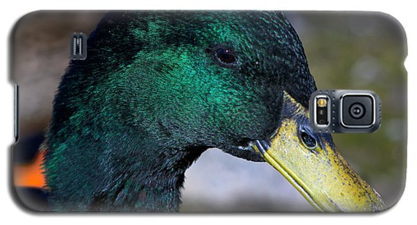 Galaxy S5 Case featuring the photograph Cayuga Duck  by Stephen  Johnson