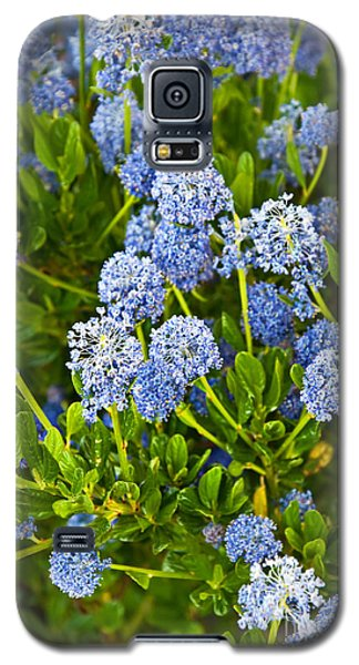 Ceanothus Impressus Santa Barbara Flowering Bush Galaxy S5 Case