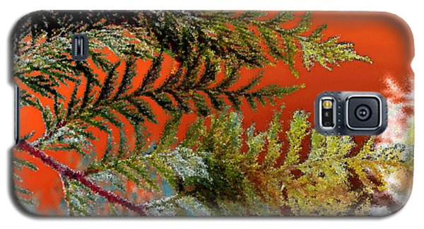 Galaxy S5 Case featuring the photograph Cedar Canvas by Gwyn Newcombe