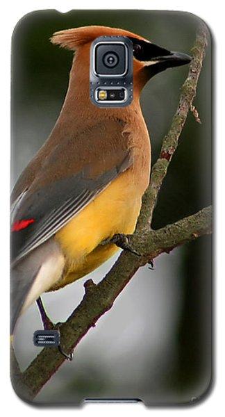Cedar Wax Wing II Galaxy S5 Case by Roger Becker
