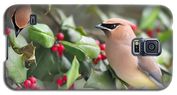 Cedar Waxwing In Holly Tree Galaxy S5 Case