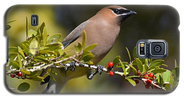 Cedar Waxwing And Red Berries Galaxy S5 Case by Kathy Baccari