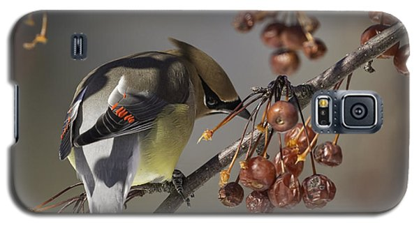 Cedar Waxwing Eating Berries 7 Galaxy S5 Case