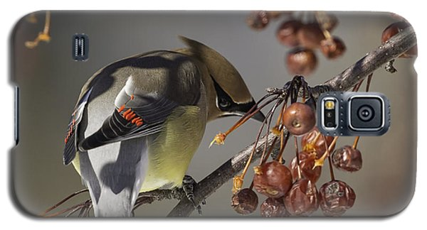 Cedar Waxwing Eating Berries 7 Galaxy S5 Case