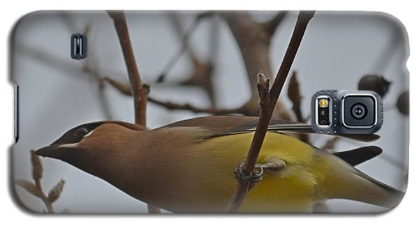 Galaxy S5 Case featuring the photograph Cedar Waxwing Feasting In Foggy Cherry Tree by Jeff at JSJ Photography