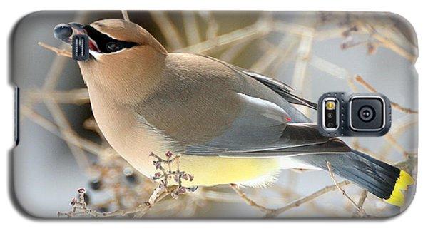 Cedar Waxwing Feeding Galaxy S5 Case