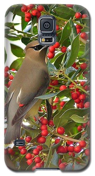 Cedar Waxwing Galaxy S5 Case by Kelly Nowak