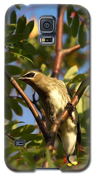 Galaxy S5 Case featuring the photograph Cedar Waxwing by James Peterson