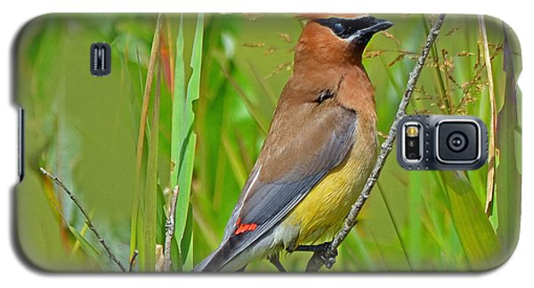 Galaxy S5 Case featuring the photograph Cedar Waxwing by Rodney Campbell