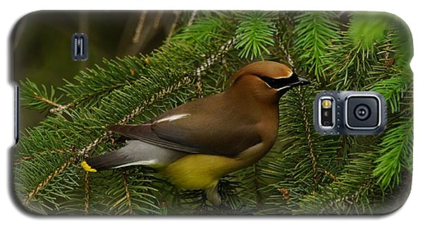 Galaxy S5 Case featuring the photograph Cedar Waxwing by Steven Clipperton