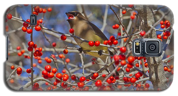 Cedar Waxwing In The Act Of Swallowing A Possumhaw Fruit Galaxy S5 Case