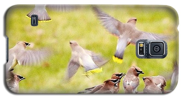 Cedar Waxwings  Galaxy S5 Case by Heidi Hermes