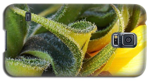 Celebration Sunflower Galaxy S5 Case by Wendy Wilton