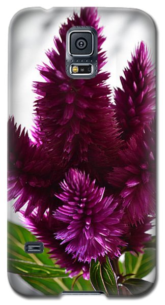 Celosia Galaxy S5 Case by Terence Davis